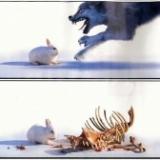 一隻兔子吃掉了狼和野豬(管理哲學)